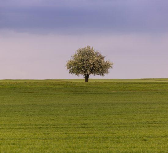 Krajobraz_12