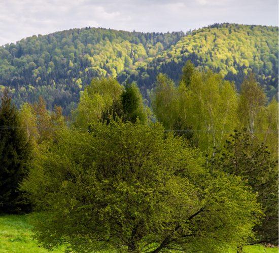 Krajobraz_78